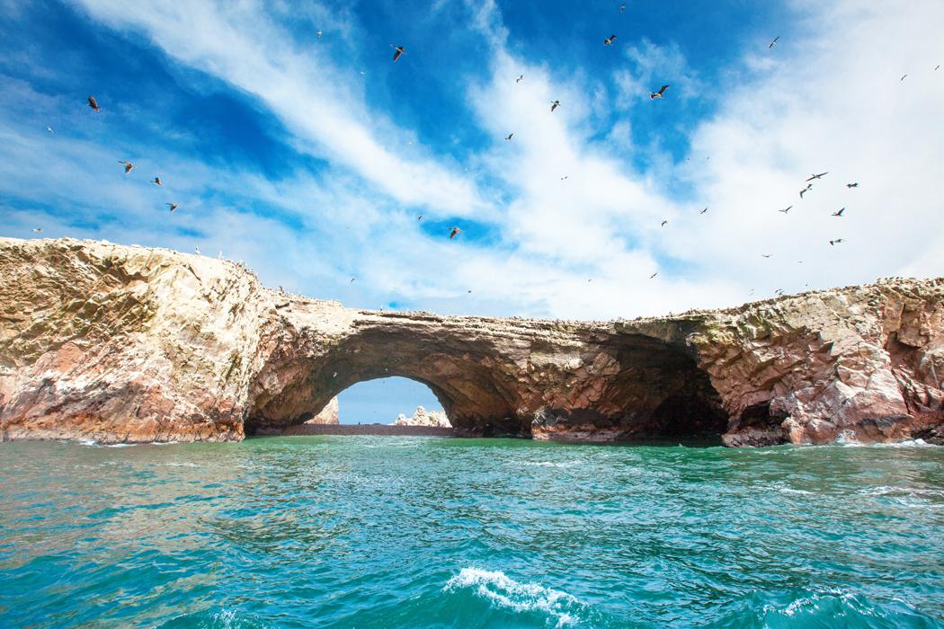 îles Ballestas Paracas, Péro